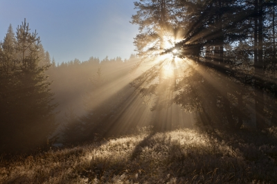 Sunbeams In Forest by Evgeni Dinev courtesy of FreeDigitalPhotos.net