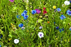 Blooming Wildflowers by franky242 courtesy of www.freedigitalphotos.net